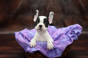 Petland Puppies Blog